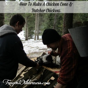 How to make a chicken cone and butcher chickens