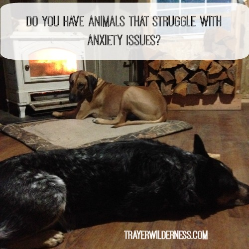 52 Weeks of Wellness – Week 5 – Featuring How To Calm Animals