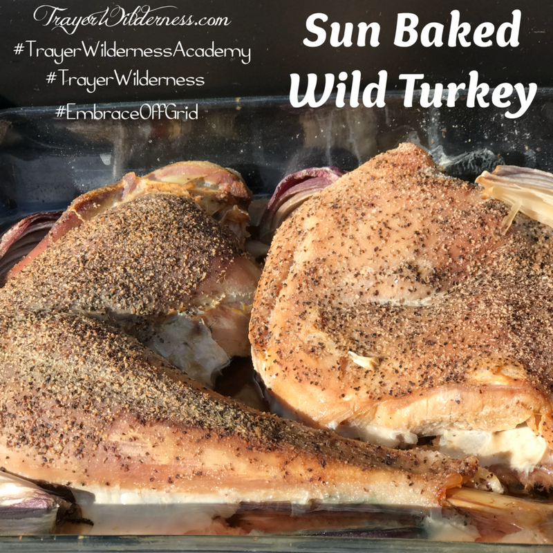 Sun Baked Wild Turkey