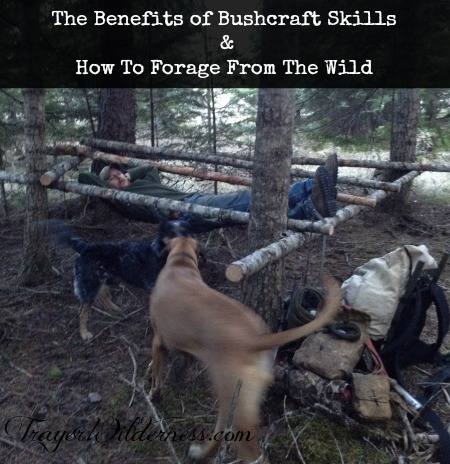 The Benefits of Bushcraft Skills and How To Forage From The Wild